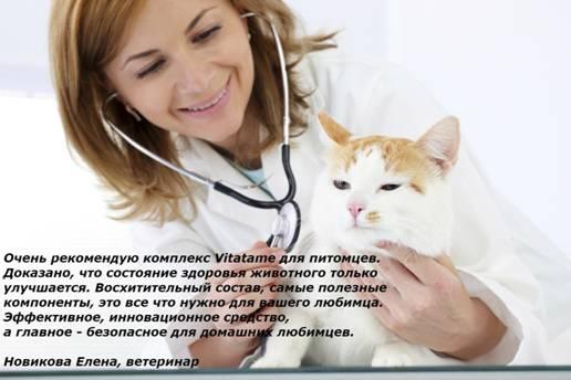 Vitatame отзывы специалистов 1