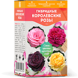 Отзывы о гибридных королевских розах: Развод или нет
