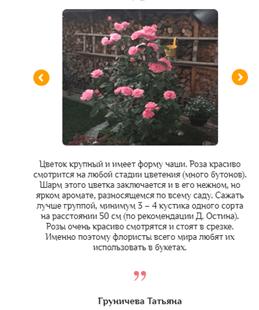 Реальные отзывы о гибридных королевских розах3