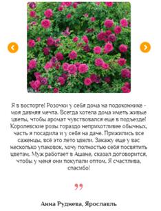 Реальные отзывы о гибридных королевских розах